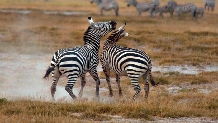 How Do Zebras Protect Themselves?
