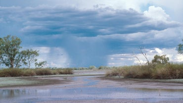 What Is an Average Amount of Rainfall in Wetlands?