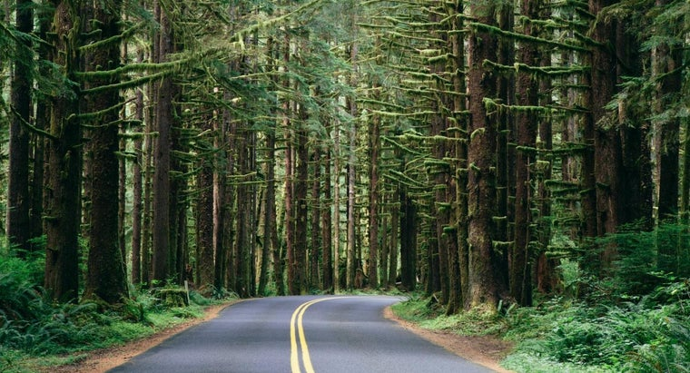 What Are the Features of Temperate Evergreen Forests?