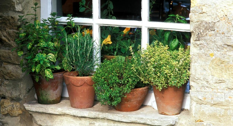 What Are Some Tips for Growing Herbs in Pots?