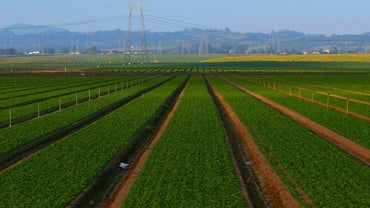 What Are the Advantages and Disadvantages of Agriculture?