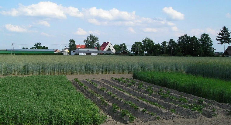 What Are Some Advantages and Disadvantages of Crop Rotation?