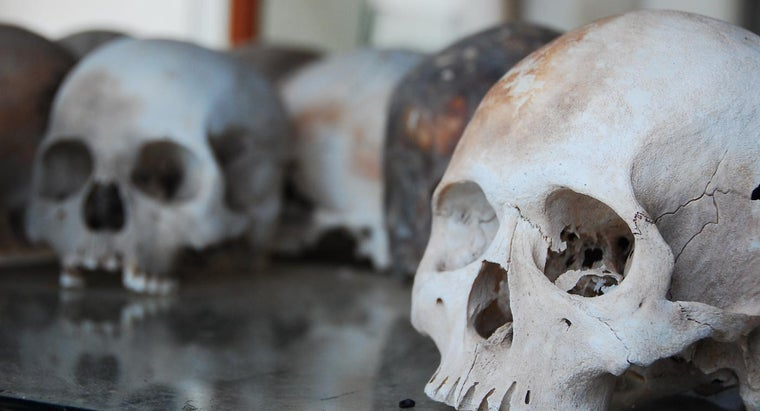 At What Age Does Your Skull Stop Growing?