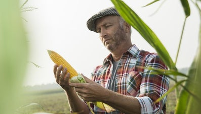 What Are Agro-Based Industries?