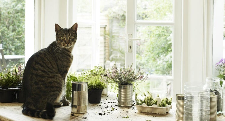 Are Amaryllis Plants Toxic to Cats?