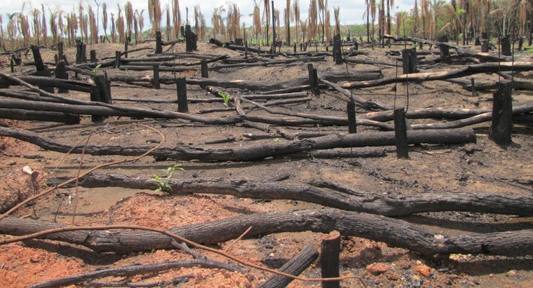 Why Is the Amazon Rain Forest in Danger?