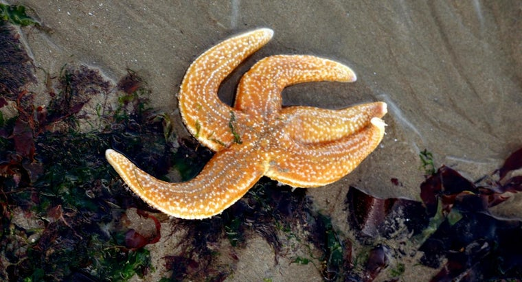 What Is the Ambulacral Groove on a Starfish?