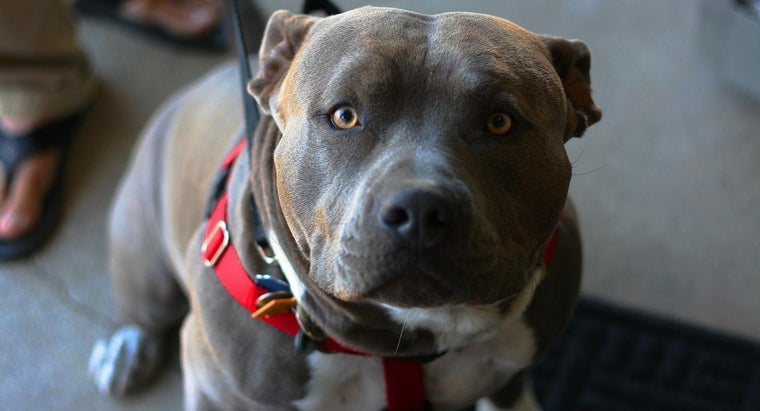 What Is the American Pitbull Registry?