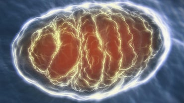 What Is an Analogy for Mitochondria?