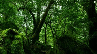 How Do Animals Adapt to the Rainforest?