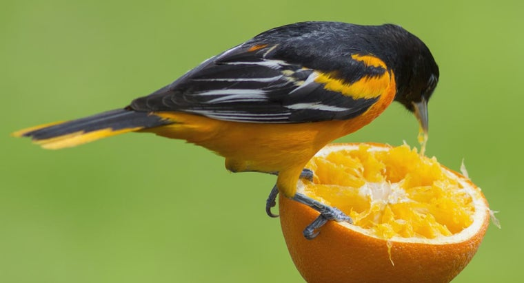 What Animals Eat Oranges Reference Com