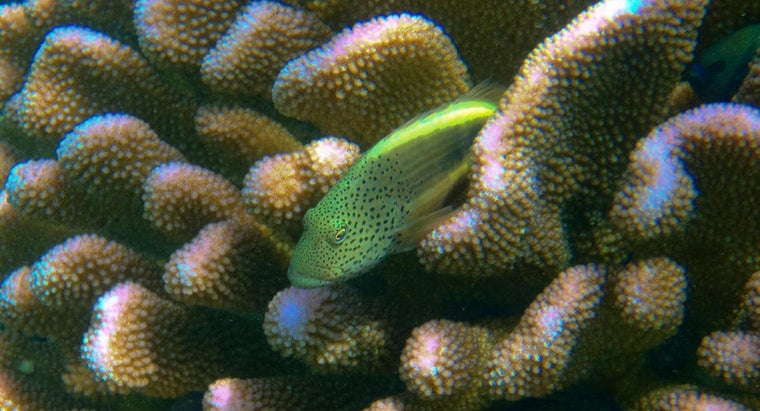 What Animals Live in Coral?