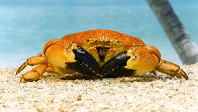 What Animals Live on Tropical Islands?