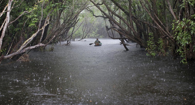 What Is the Yearly Rainfall of the Amazon Rain Forest?