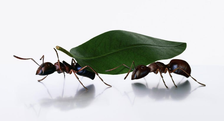 Do Ants Carry Germs?