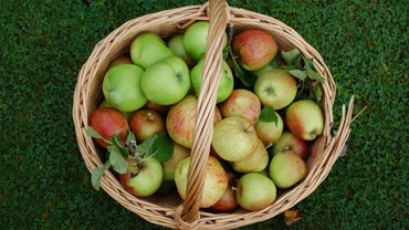 When Does Apple Picking Season Begin?