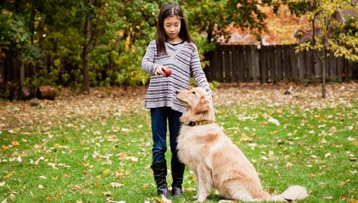 Are Apple Seeds Poisonous to Dogs?