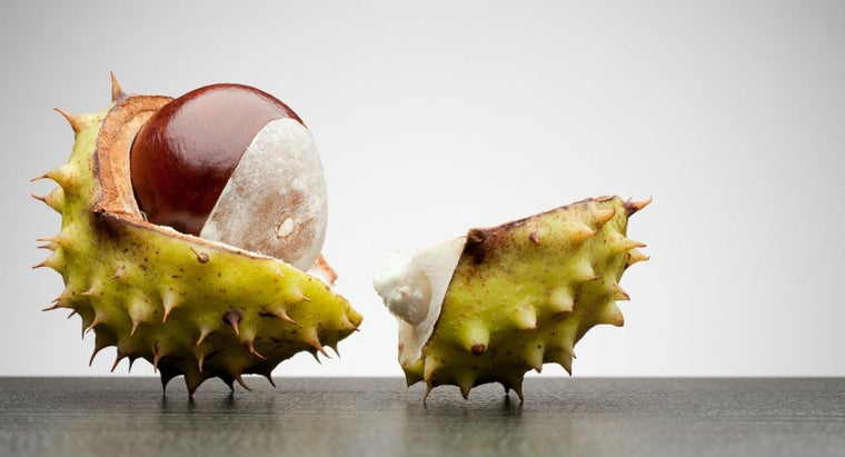 Are Horse Chestnuts Poisonous Reference