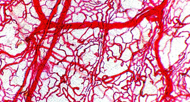 Why Do Arteries Have Thicker Walls Than Veins?