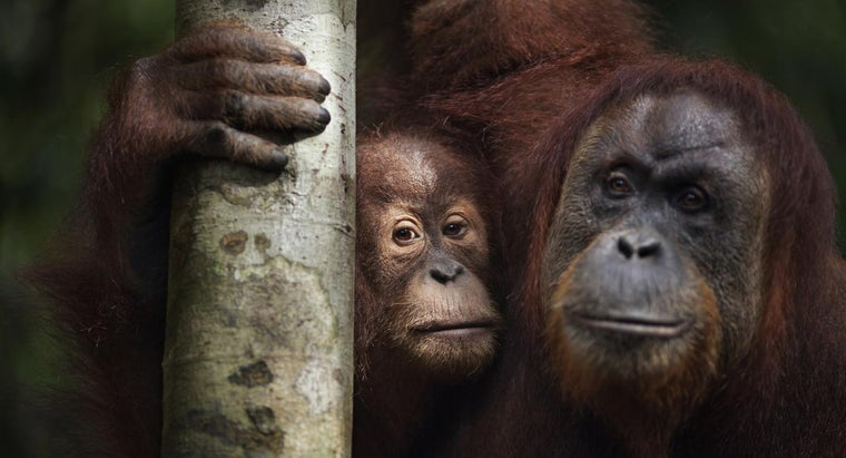 What Are Some of Asia's Most Endangered Animals?