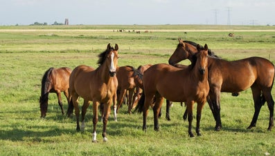 What Is the Average Height of a Horse?