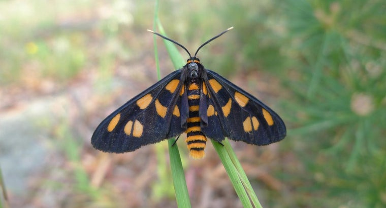 What Is the Average Life Span of a Moth?
