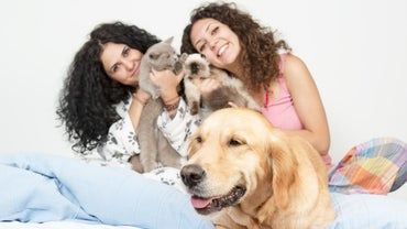 What Is the Average Number of Pets Per Household?