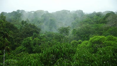 What Is the Average Rainfall in the Amazon Rainforest?
