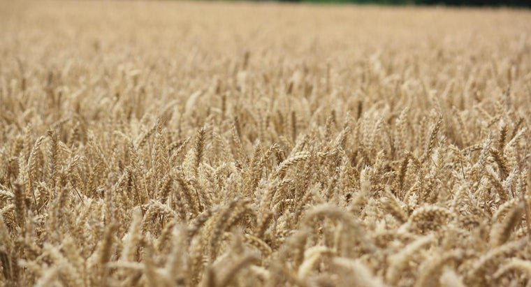 What Was the Average Wheat Yield Per Acre in the 1800s?