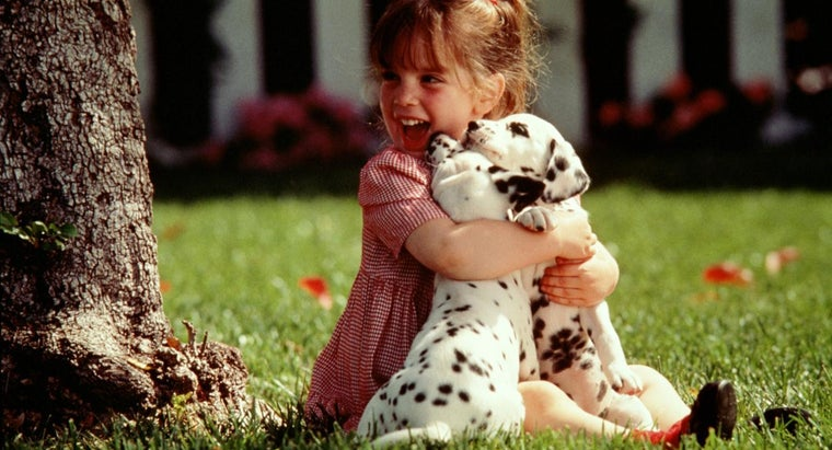 What Are Baby Dalmatians Like?