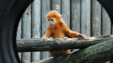 What Is a Baby Monkey Called?