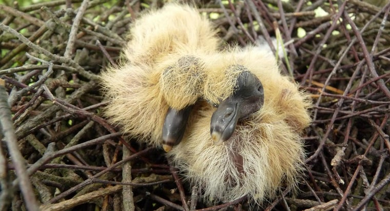 What Is a Baby Pigeon Called?