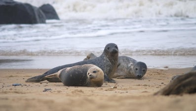 What Are Baby Seals Called?