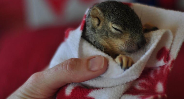What Is a Baby Squirrel Called?