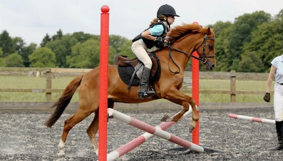 What Are the Basic Steps for Learning Horse Jumping?