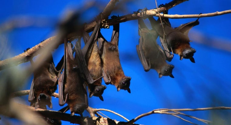How Do Bats Reproduce?