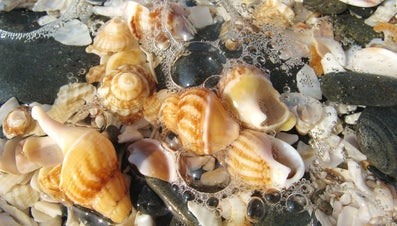 What Are the Best Beaches for Seashell Collecting?