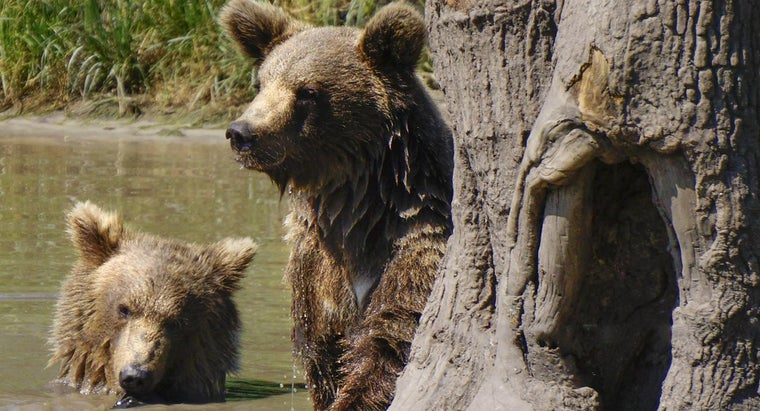 How Do Bears Reproduce?