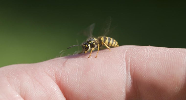 Why Do Bees Sting People?