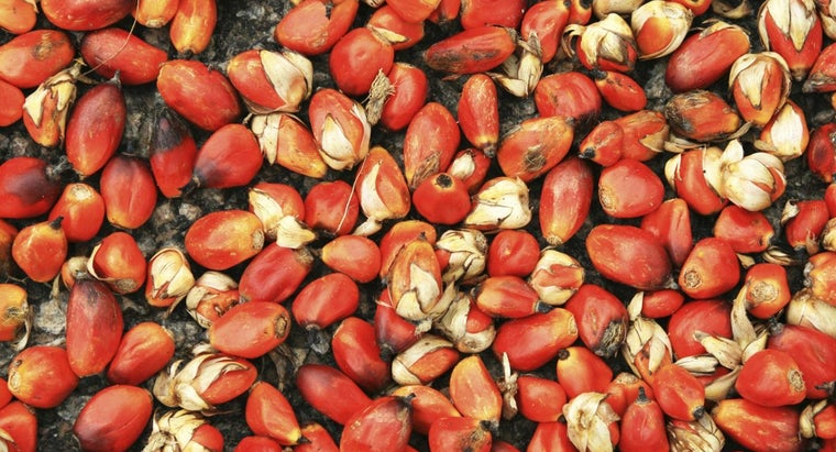 What Are Some Benefits of Red Palm Oil?