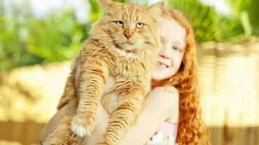 How Big Was the World's Largest House Cat?