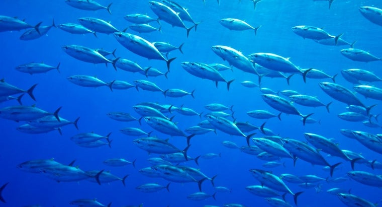 What Was the Biggest Bluefin Tuna Ever Caught?