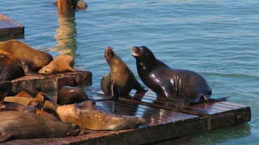 What Is the Biome of the Sea Lion?