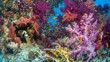 What Are Some Biotic Factors of a Coral Reef?