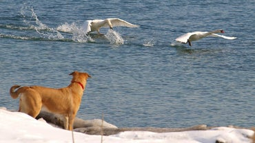 "What Is ""Bird Dogs"" in Prospecting?"