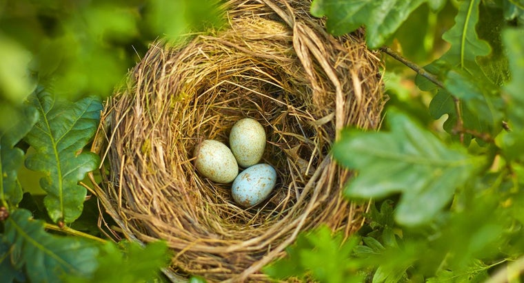 What Bird Lays the Smallest Egg?