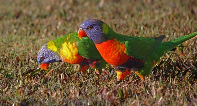 Are Birds Attracted to Bright Colors?