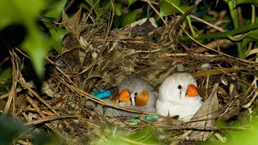 Why Do Birds Build Nests?