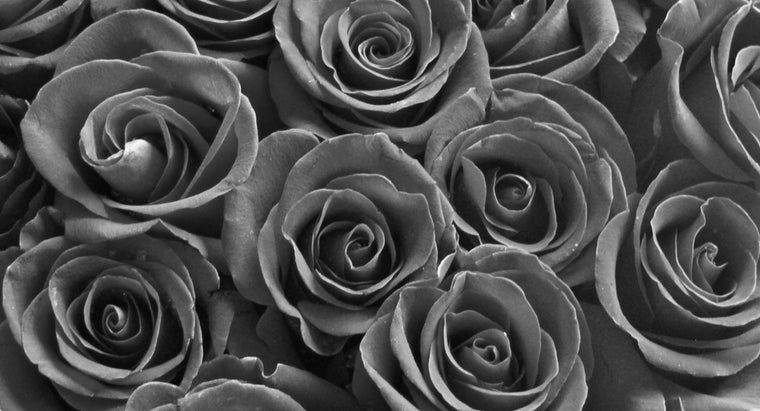 How Are Black Roses Made?