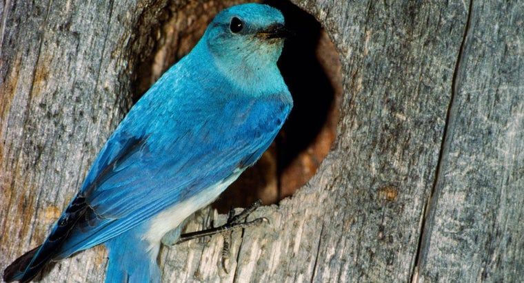 What Does a Bluebird Symbolize?